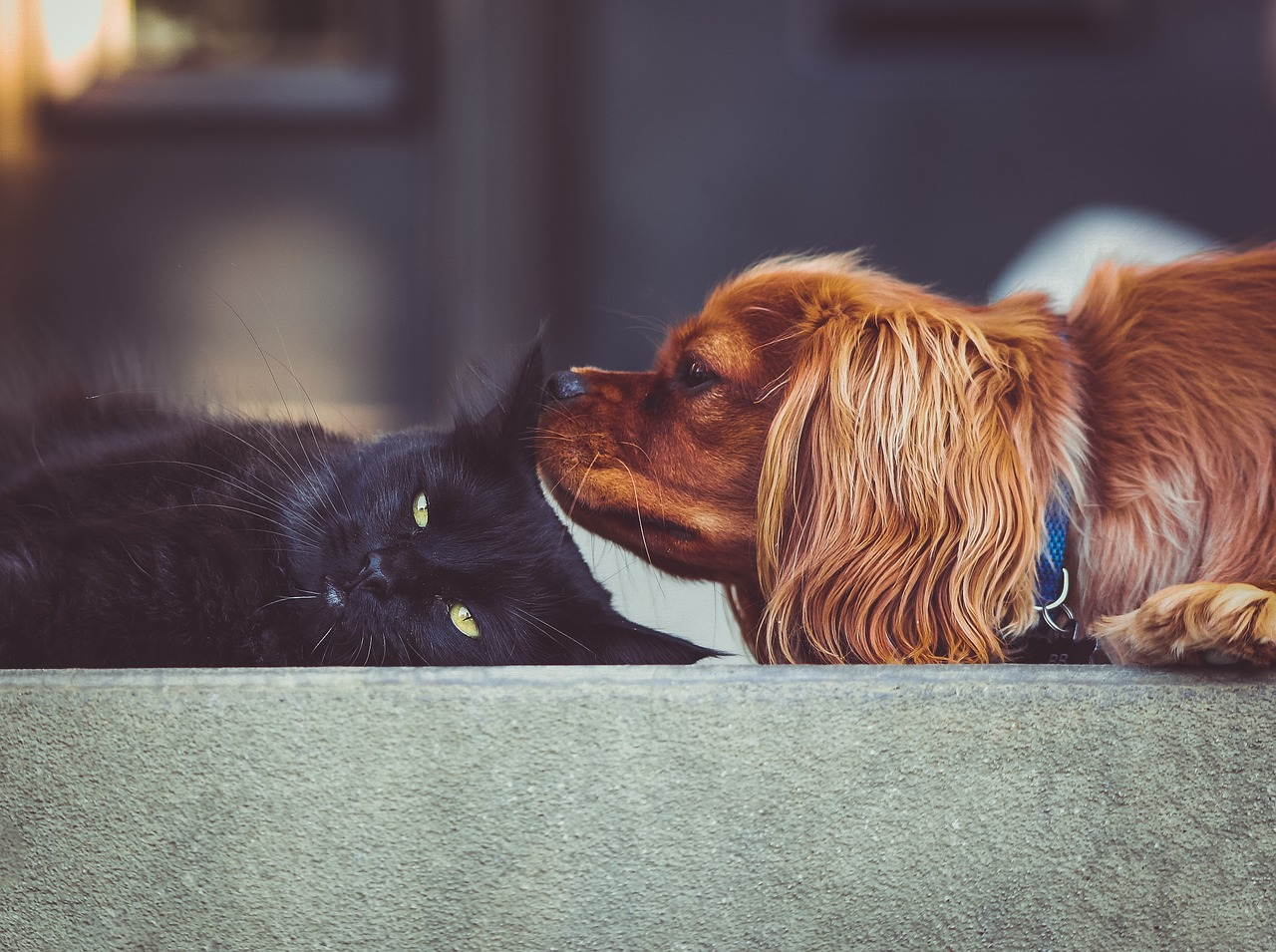 How to Help Your Cat and Dog Get Along