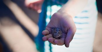 A Baby Horned Lizard and Other New Mexico Thoughts