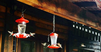 New Mexico Hummingbirds Galore at The Magic Zoo!